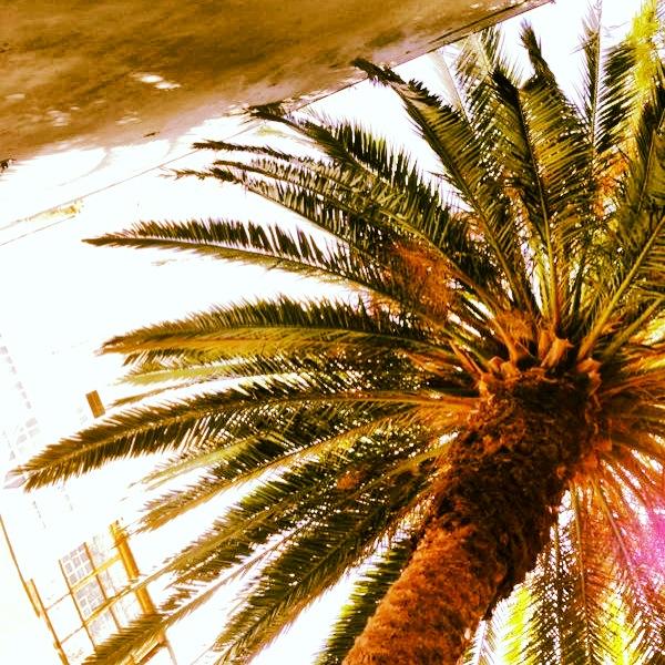 woga palmera